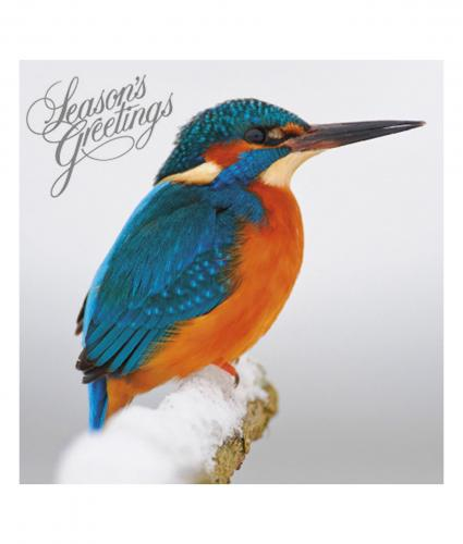 christmas kingfisher cancer research uk christmas card