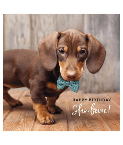 Handsome Harvey Birthday Card