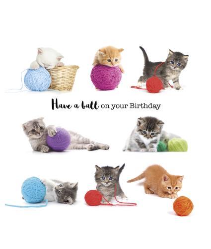 Playful Kittens Birthday Card