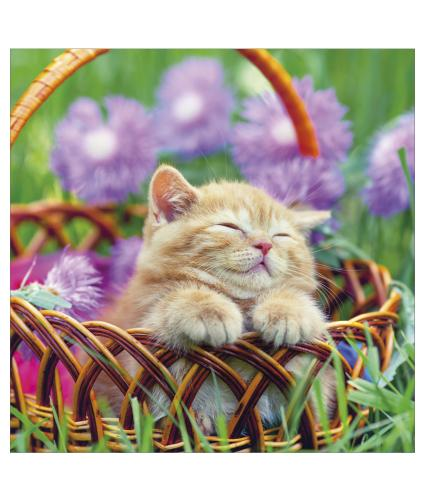 Completely Contented Kitty  Greetings Card