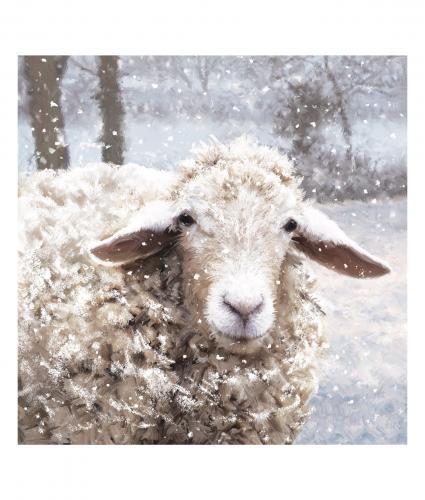 baaarney the sheep bi-lingual cancer research uk christmas card