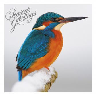 christmas kingfisher cancer research uk christmas card