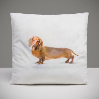Dexter the Dog Cushion